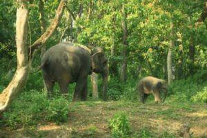 Chitwan olifant