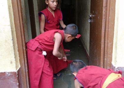 Prachtreis in Nepal